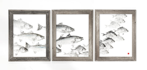 Framed bass school chasing scup triptych