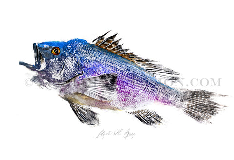 22 x17 Black Sea Bass Gyotaku Archival Print