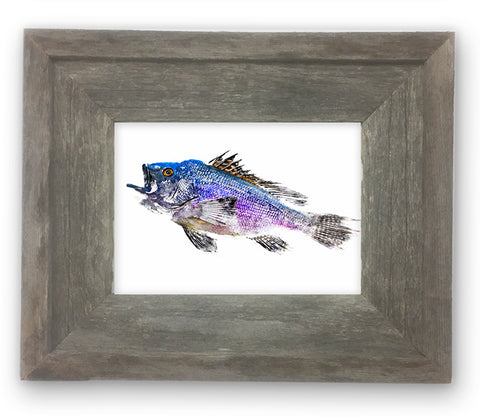 Small Framed Black Sea Bass