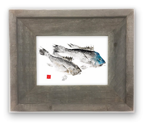 Small Framed  Black Sea Bass pair