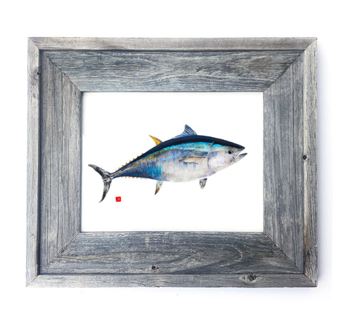 16 x 13 Framed Bluefin Tuna