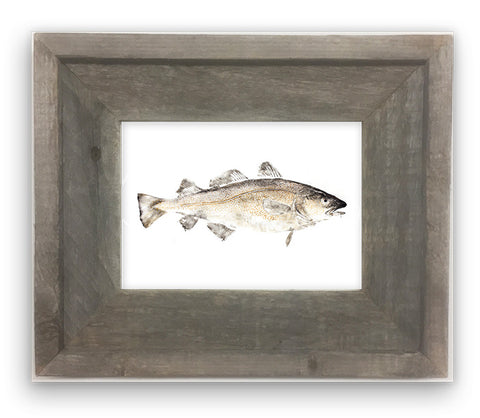 Small Framed Codfish color