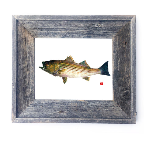 16 x 13 Framed Striped Bass