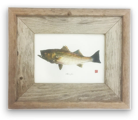 Small Framed Striped Bass with color