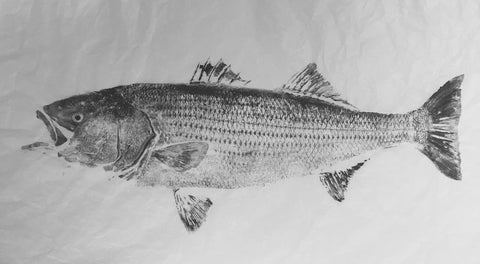 Original 50 pound striped bass- print 1