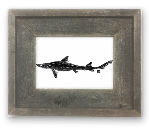 Small Framed Dogfish