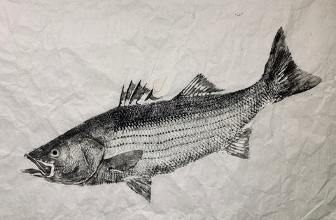 Black ink Striped bass 36 x 24 Original  Print