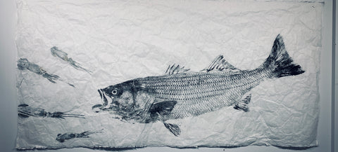 Striped bass chasing squid 54 x 27 Original  Print