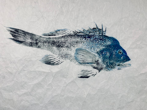 Black Sea Bass Original  Print