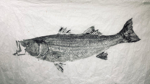 Black ink Striped bass 48 x 25- Original  Print