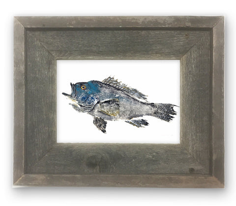 Small Framed Male Black Sea Bass