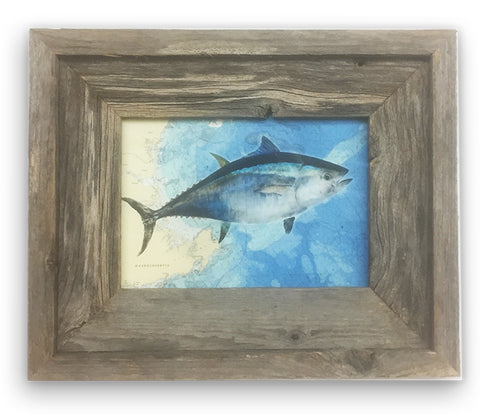 Small Framed Bluefin Tuna On Bathymetric chart Of Gloucester and Ipswich Bay