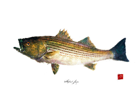 22 x17 Striped Bass Gyotaku Archival Print