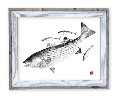 26 x 22 framed striped bass chasing mackerel