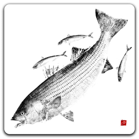 Striper and mackerel  Coaster