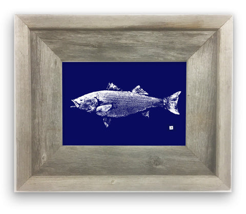 Small Framed Striped bass on Blue