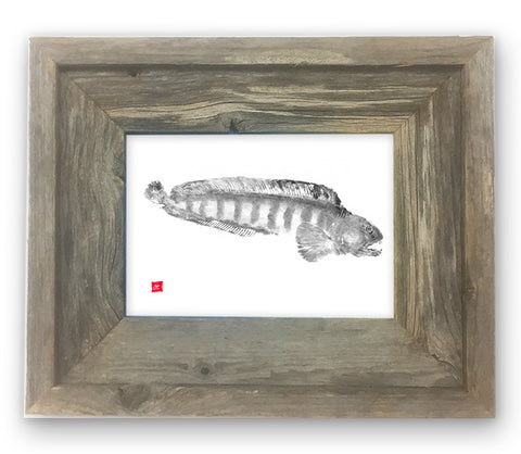 Small Framed Wolffish