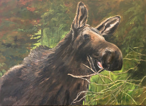 "Munching Moose, 24 x 30"" Oil"