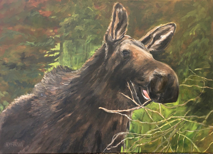 Munching Moose, 24 x 30