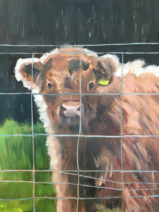 "Scotland Calf, 16 x 12"" oil"