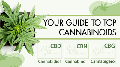 Guide to Cannabinoids