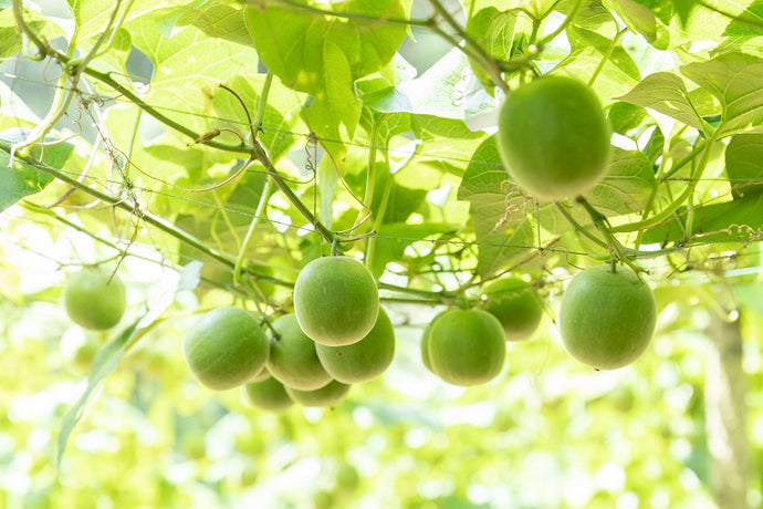 8 incredible benefits of monk fruit