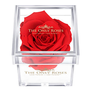 The Only Roses Real Preserved Luxury Roses That At Last A Year