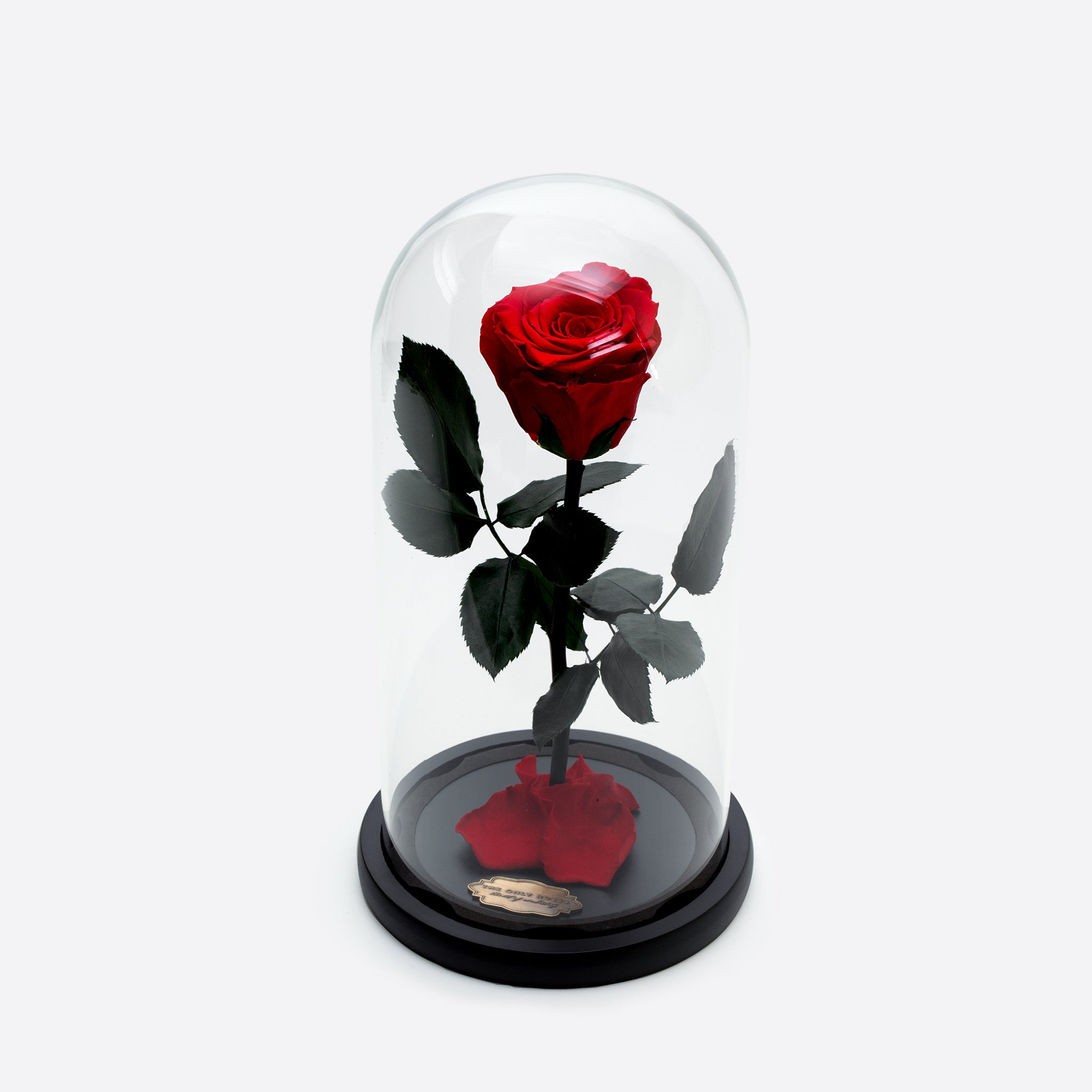 Red Preserved Rose Beauty and The Beast Glass Dome