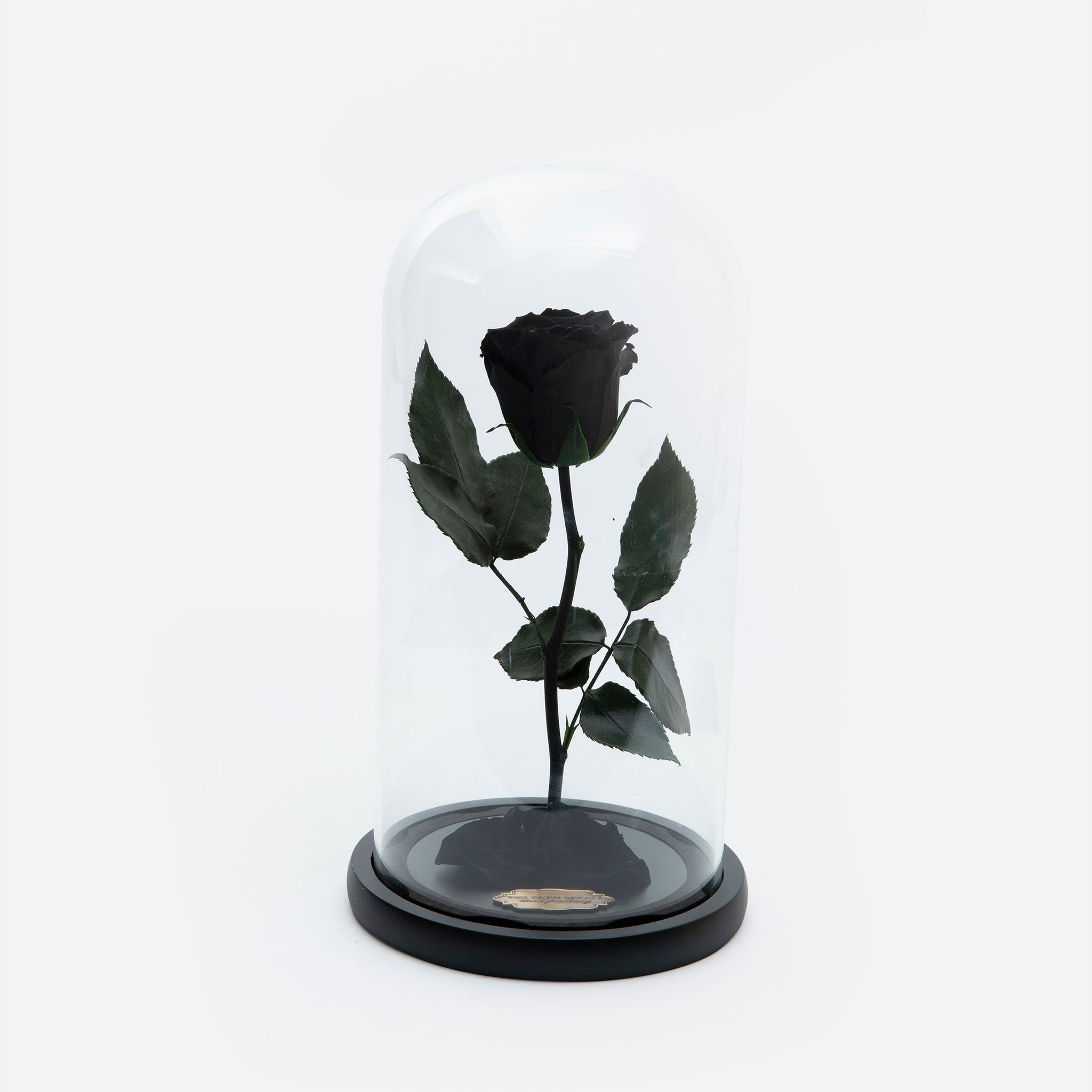 Black Preserved Rose Beauty and The Beast Glass Dome