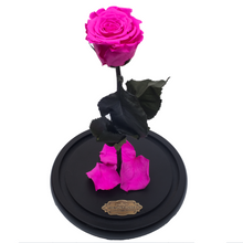 Load image into Gallery viewer, Hot Pink Preserved Rose | Beauty and The Beast Glass Dome - The Only Roses