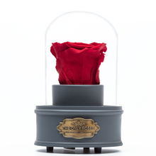 Load image into Gallery viewer, Red Preserved Rose|The Only Regular Grey Music Globe - The Only Roses