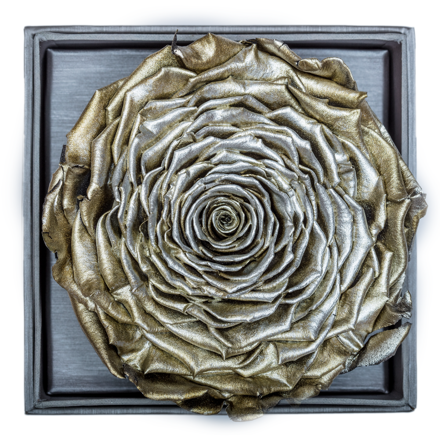 Silver Mega Preserved Rose | Crystalline Rose Box - The Only Roses