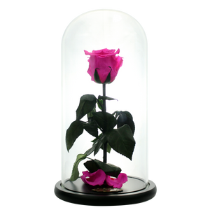 Hot Pink Preserved Rose | Beauty and The Beast Glass Dome - The Only Roses