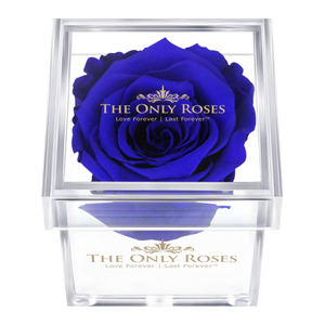 Royal Blue Preserved Rose | Petite Acrylic Rose Box