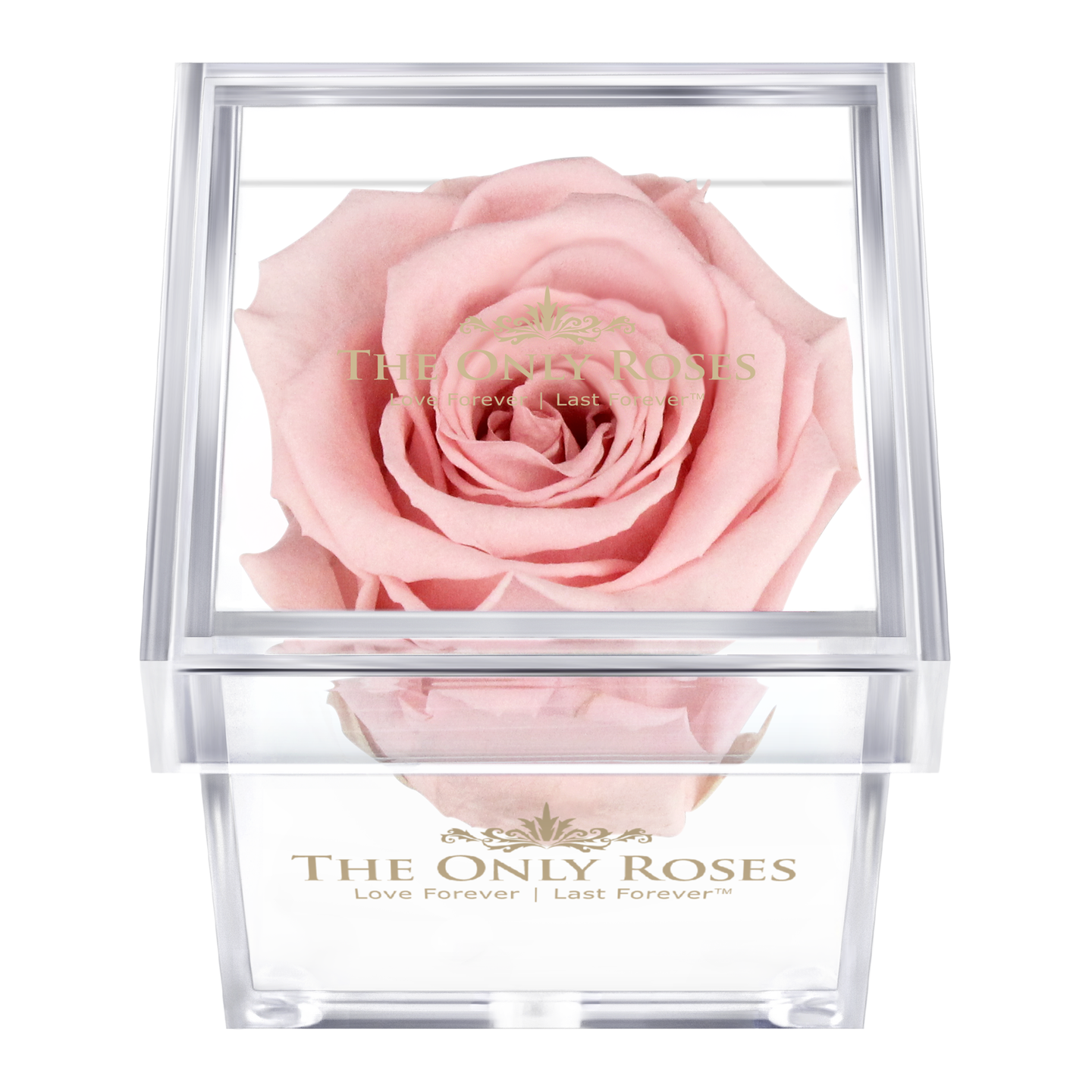 Light Pink Preserved Rose | Petite Acrylic Rose Box