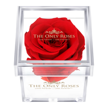 Load image into Gallery viewer, Bright Red Preserved Rose | Petite Acrylic Rose Box