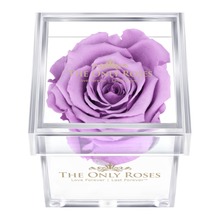 Load image into Gallery viewer, Light Purple Preserved Rose | Petite Acrylic Rose Box