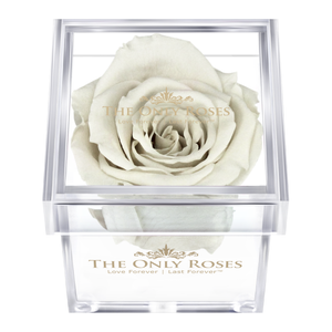 White Preserved Rose | Petite Acrylic Rose Box