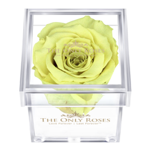 Load image into Gallery viewer, Light Yellow Preserved Rose | Petite Acrylic Rose Box