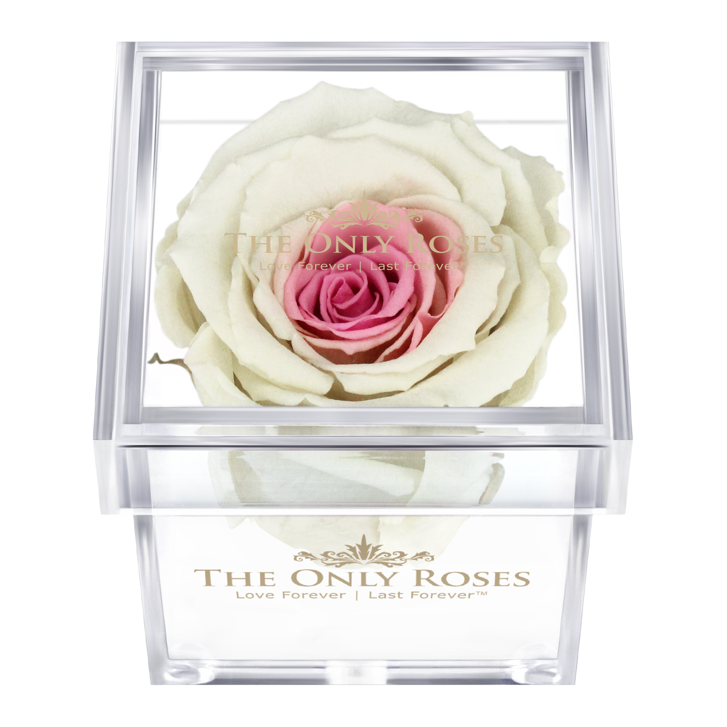 White & Pink Preserved Rose | Petite Acrylic Rose Box