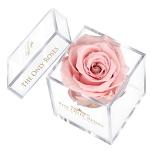 Load image into Gallery viewer, Light Pink Preserved Rose | Petite Acrylic Rose Box