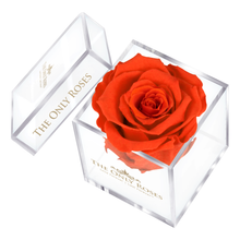 Load image into Gallery viewer, Orange Preserved Rose | Petite Acrylic Rose Box