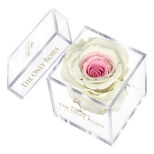 Load image into Gallery viewer, White & Pink Preserved Rose | Petite Acrylic Rose Box