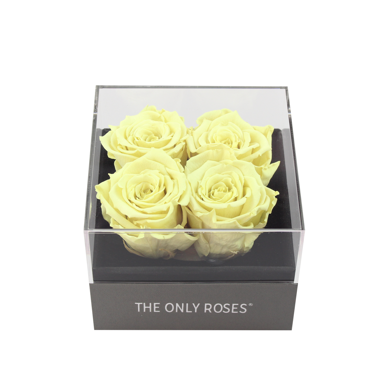 Light Yellow Preserved Roses | Small Square Classic Grey Box - The Only Roses