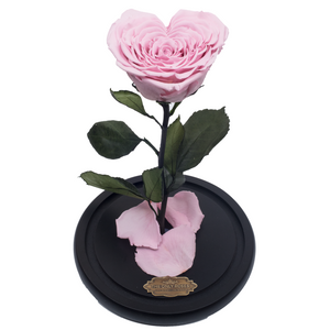 Pink Heart Shape Preserved Rose | Beauty and The Beast Glass Dome - The Only Roses