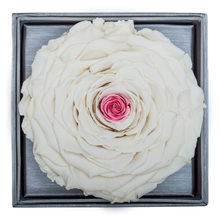 Load image into Gallery viewer, White & Pink Mega Preserved Rose | Crystalline Rose Box - The Only Roses