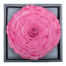 Load image into Gallery viewer, Pink Mega Preserved Rose | Crystalline Rose Box - The Only Roses