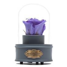 Load image into Gallery viewer, Purple Preserved Rose|The Only Regular Grey Music Globe - The Only Roses