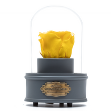 Load image into Gallery viewer, Yellow Preserved Rose|The Only Regular Grey Music Globe - The Only Roses