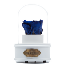 Load image into Gallery viewer, Royal Blue Preserved Rose|The Only Regular White Music Globe - The Only Roses